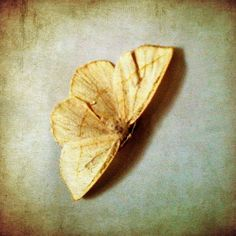 Fine Art Photography Square 5x5 Vintage Texture Moth Tan Aqua KarenWebb Photography on Etsy, 15,48€