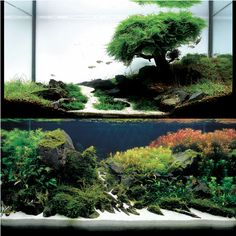 a couple of examples of planted aquariums for residences | from Aqua Forest Aquarium | via http://www.adana-usa.com/index.php?main_page=gallery