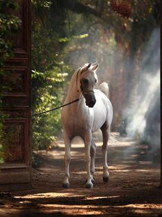 A beautiful image. #horse  http://www.annabelchaffer.com/categories/Equestrian-Gifts/