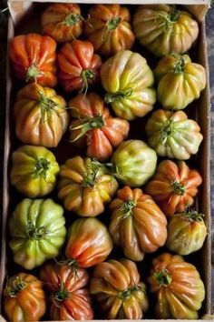s-e-a-s-o-n-s: heirloom tomatoes Eat Fruit, Fruit And Veg, Fruits And Vegetables, Food Styling, Food Texture, Tomato Garden, Heirloom Tomatoes, Tutti Frutti, Roasted Tomatoes