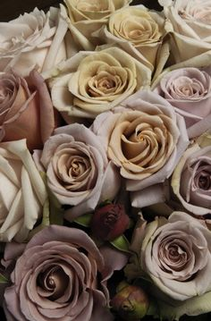 A few different shades of antique toned roses - 'antique' 'honeymoon' and 'caramello'