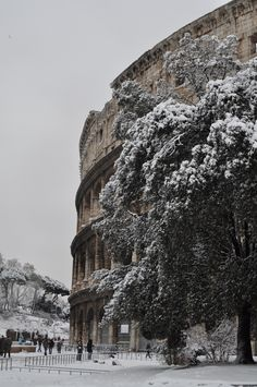 Roma sotto la neve...The Colosseum in a snowfall.