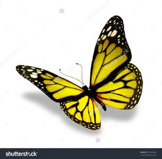 Color butterfly, isolated on white background