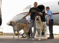 Marine's Rescued Dogs Denied Flights, Wrigley Heiress Charters Private Jet.