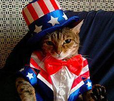 #cat #Usa