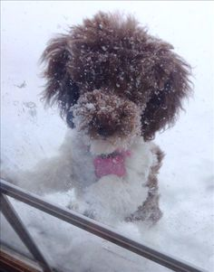 5 tips to keep pets safe in the winter