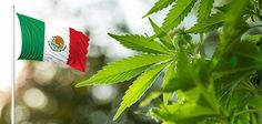 Mexico Just Beat the U.S. to Legalizing Medical Marijuana #news #alternativenews