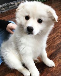 After months of begging my parents to let me get a dog, they finally let me get this polar bear - more at superhuggable.com