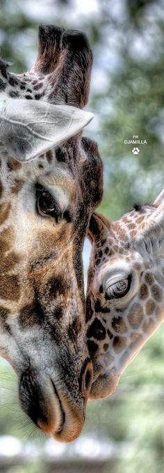 Iubirea mamei e mai presus de orice!