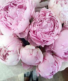 Pure L��VE... #flowerslovers#kukladolly#dolcegabbana#сахарныйсахарок#медовыймедок#kukasuperstar#dolcevita http://gelinshop.com/ipost/1523466626975074327/?code=BUkcNNYAwgX