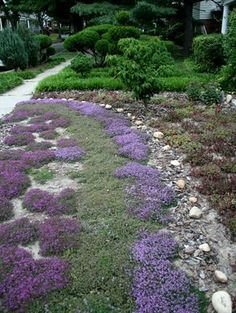 Xeriscaping with thyme