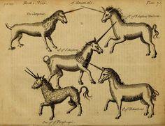 Medicina fantástica: el poder curativo del cuerno de unicornio y otros animales míticos en grabados del siglo XVII | Pijamasurf