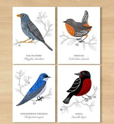 Your place to buy and sell all things handmade Rare Birds, Exotic Birds, Bird Illustration, Botanical Illustration, Albino Peacock, Most Beautiful Animals, Plant Art, Animal Decor, Bird Pictures