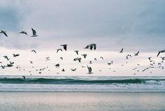 Birds fly.....