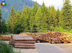 Bioenergia Fiemme – Eneco – Acsm Primiero: Accordo biomassa-energia