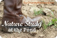 Love this resource: Nature Study at the Pond | Our Journey Westward @Cindy West (Our Journey Westward)