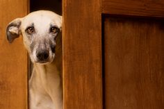 A door is... by Elke Vogelsang on 500px