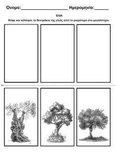 Olive Tree, Hanukkah, Olive Oil, Worksheets, Kindergarten, Greek, School, Plants, Kindergartens