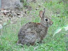 Bunny in the Backyard