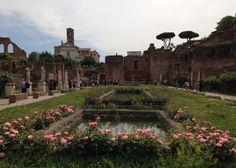 Roser i april på Forum Romanum