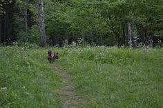 Kuvahaun tulos haulle karkalin luonnonpuisto
