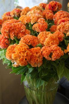 So ein schöner Strauß bringt Farbe und Fröhlichkeit in die Wohnung #twbm #blumen #vase #orange #flower