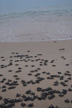 SUP World Championships is dedicated to our sacred ocean and the preservation of our local turtles. Turtle Release took place in Palmilla Beach.