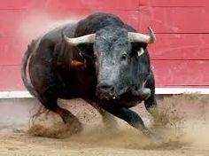 toros - Buscar con Google