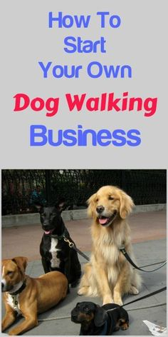 Start Your Own Dog Walking Business ... see more at http://PetsLady.com ... The FUN site for Animal Lovers