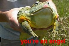 African Bullfrog - Pyxicephalus Adspersus : I Love Animals and . African Bullfrog, Le Vent Se Leve, Cute Frogs, Frog And Toad, Frog Frog, Reptiles And Amphibians, Wholesome Memes, Reaction Pictures, My Friend
