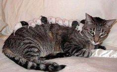 Kat met Muizen