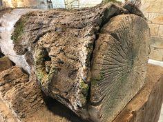 🚀El hiper-realismo en tus manos 🙌 🔶La semana pasada realizamos el primer Curso-Tecnico de Tematizacion del año con un gran Exito! 🔸Los alumnos realizaron grandes imitaciones de piedra, roca, ladrillo, tronco y madera con el Sistema ESTonetex. 🔜Próximo Curso-Tecnico, del 15 al 19 de marzo, 2 PLAZAS DISPONIBLES ‼️ #theming #decor #morterotxt #tematizacion #jardin #fachadas #revestimento #formación #sistemaestonetex #soytematizador Nature, Hyperrealism, Tiling, Brick, Facades, Wood, Barrel Ceiling, First Grade, House Building