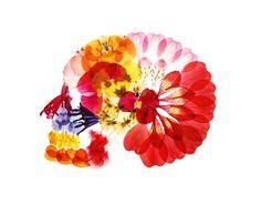 押し花を使った、世にも美しい頭蓋骨!?多田明日香さんの「骨格アート」がすごい