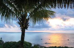 Palm tree at the sunset Tranquilo Lodge Drake Bay, Osa Peninsula Costa Rica #fishing #travel #vacation #food
