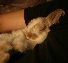 Snuggle-Bunny
