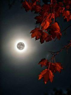 Images By Frida Bibi On HERMOSA LUNA - BEAUTIFUL MOON | Moon
