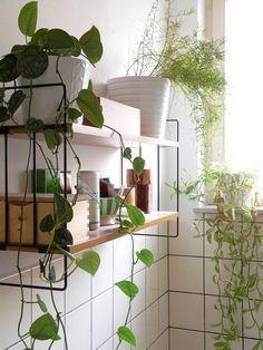 Pinned Image #tiles #plant Hanging Plants, Indoor Plants, Indoor Garden, Garden Plants, Outdoor Gardens, Decoration Plante, Bathroom Plants, Bathroom Ideas, Plant Shelves
