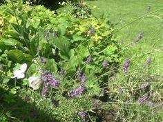 Hommels en bijen vliegen af- en aan