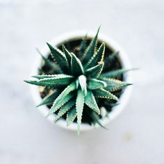 Takila@ Drawer Cafe | Flickr - Photo Sharing! #haworthia #succulent