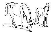 DOWNLOAD 2dHorse.dwg