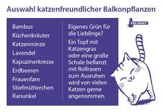 Hier haben wir für euch einige Tipps für Balkonpflanzen, die ihr als Katzenbesitzer bedenkenlos verwenden könnt.