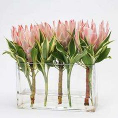 Roses and Rust: A Passion For Proteas - A contemporary arrangement in an oblong vase. More (rectangular table flower arrangements) Protea Wedding, Wedding Table Flowers, Table Wedding, Rectangle Vase, White Flower Arrangements, Protea Flower, Protea Art, Beautiful Flowers, Protea Centerpiece