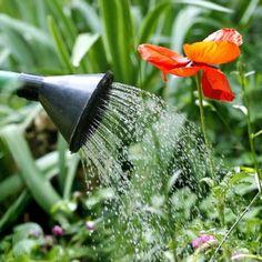 #Consejos para mantener la belleza del #jardín durante el #verano