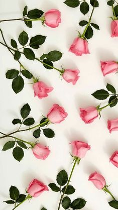 pink roses #style