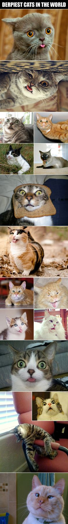 The Derpiest Cats In The World cute animals cat cats adorable animal kittens pets kitten funny pictures funny animals funny cats Cute Funny Animals, Funny Animal Pictures, Funny Cute, Cute Cats, Funny Pics, Super Funny, Funny Images, Hilarious, Crazy Cat Lady