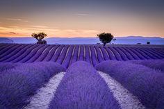Purple lines... - null