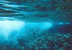 underwater craziness by JessaOwnzUintheFace.deviantart.com on @deviantART