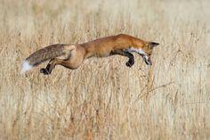As melhores fotografias de Natureza de 2013 - PÚBLICO