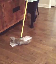 Cat Helps Cleaning the House