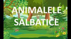 Animalele salbatice | Arici pentru pitici | Episodul 6 Transportation, Preschool, Rainbows, Artwork, Youtube, Work Of Art, Auguste Rodin Artwork, Artworks, Nursery Rhymes